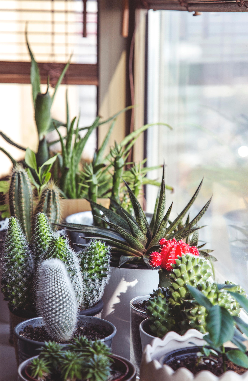 jardin interno cactus
