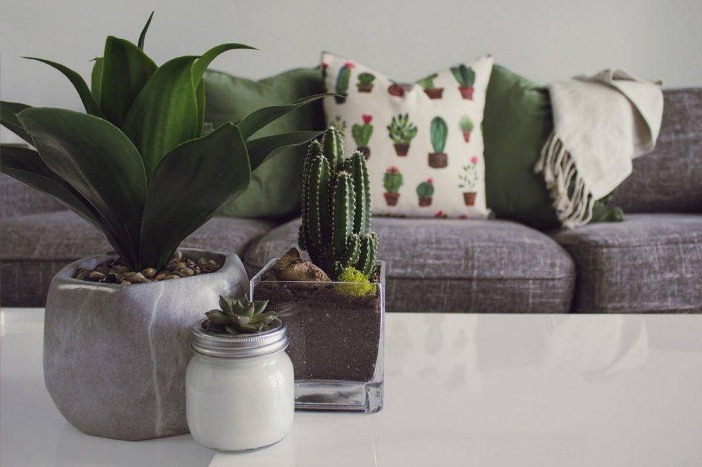 Disfruta de las plantas suculentas y dale un toque único a tu hogar