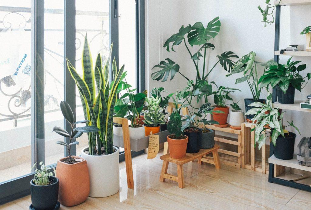 Dale vida a una cocina con especias y hierbas aromáticas